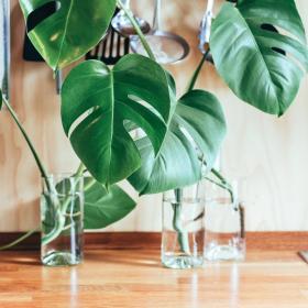 4 choses à éviter absolument pour ne pas faire mourir vos plantes d'intérieur