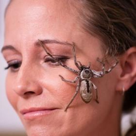 La femme qui adorait les araignées