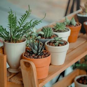 Quand faut-il arroser ses plantes d'intérieur ?