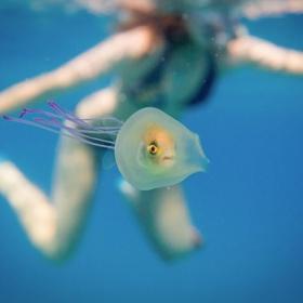 La photo incroyablement rare du poisson coincé à l'intérieur d'une méduse