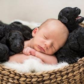 Ces photos de naissance avec 9 chiots qui entourent le bébé sont tout simplement adorables