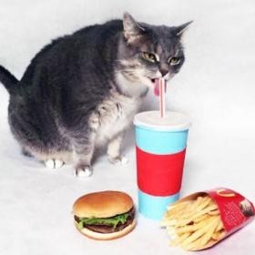 Un graphiste recrée les autocollants Facebook de Pusheen le chat avec son propre chat, et c'est hilarant !