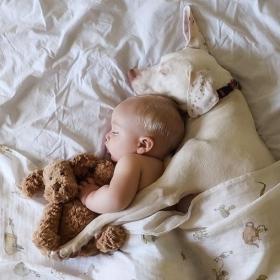 Ce bébé de 8 mois et cette chienne adorent faire la sieste ensemble... et ils sont trop mignons !