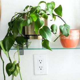 Les 5 meilleures plantes à mettre dans sa salle de bain