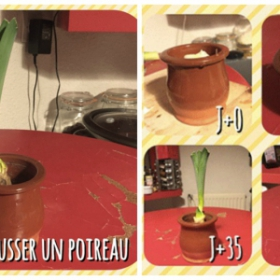 DIY : je fais pousser un poireau... dans ma cuisine !