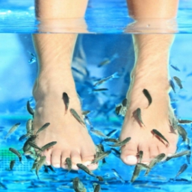 La Fish Manucure : soin écœurant ou vraiment novateur ?