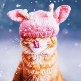 Découvrez Ginger, le chat roux tellement magnifique qu'il a son photographe personnel