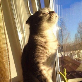 30 chats qui adorent la chaleur