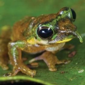 12 animaux rares et incroyables que vous n'avez sûrement jamais vus