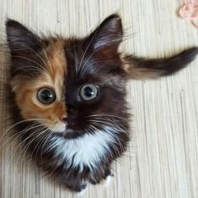 Voici Yana, l'adorable chatte aux deux visages qui va vous faire craquer !