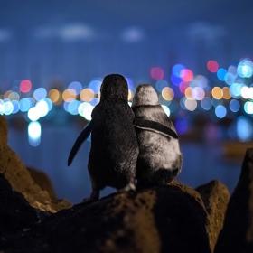 Cette photo attendrissante de 2 pingouins qui s'enlacent tendrement a fait le tour du monde