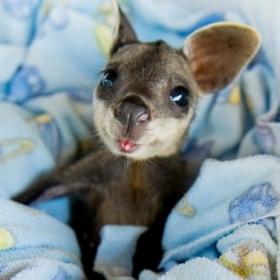12 bébés animaux qui feront fondre les plus durs d'entre nous