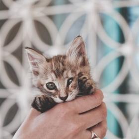 18 photos de chats tellement adorables que vous ne pourrez pas vous empêcher de sourire