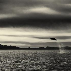 Ce photographe a passé 25 ans à montrer la beauté majestueuse des dauphins et des baleines