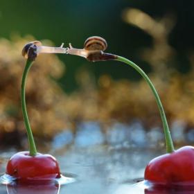 15 photos adorables qui montrent que l'amour est partout autour de nous