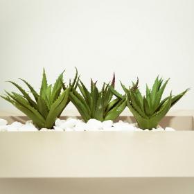 7 façons d'utiliser l'aloe vera pour apaiser coups de soleil, piqûres de moustique et irritations