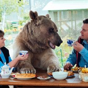 Un couple russe a adopté un ours orphelin il y a 23 ans, et ils vivent toujours tous ensemble !