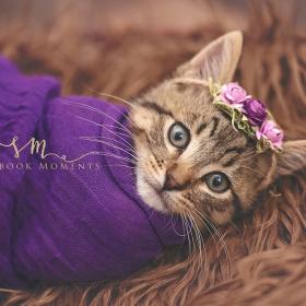 Cette petite fille avait envie d'un shooting photo pour son chaton : voilà le résultat, et c'est adorable !