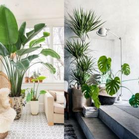 5 bienfaits insoupçonnés des plantes pour la santé