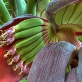 17 aliments naturels que vous n'avez jamais vus avant leur récolte
