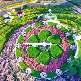 Découvrez le Dubaï Miracle Garden, le plus grand jardin de fleurs du monde !