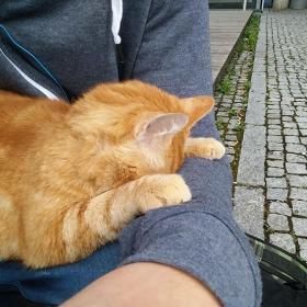Ce chat vient tous les jours à l'Université pour encourager les étudiants en leur faisant des câlins