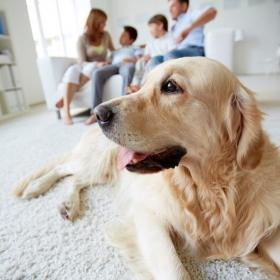 Ménage : comment avoir une maison propre quand on a un animal ?