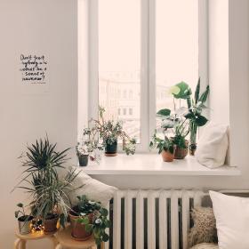 2 astuces simples et efficaces pour garder ses plantes en vie pendant les vacances