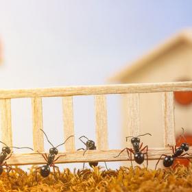 Les insecticides naturels pour repousser efficacement les fourmis