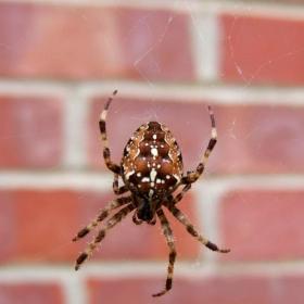 Voici la plante qui fait fuir les araignées et que vous devriez mettre chez vous pour ne plus avoir de mauvaises surprises