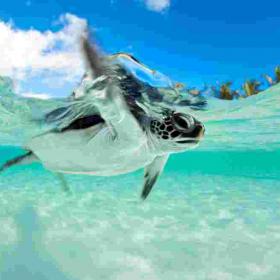 Alerte Job de Rêve : devenez soigneur de tortues dans cet hôtel de luxe aux Maldives