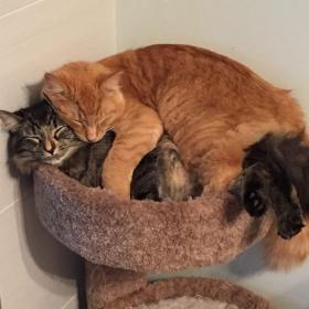 Ces chats sont inséparables : ils continuent à vouloir dormir ensemble même s'ils sont devenus bien trop grand pour leur lit