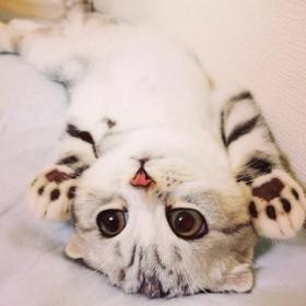 Découvrez Hana, le chat aux grands yeux ronds qui fait fondre le coeur des Instagramers