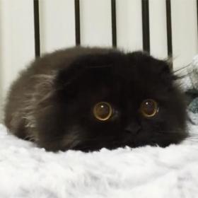 Impossible de ne pas craquer pour Gimo, le chat aux yeux immenses et trop mignons
