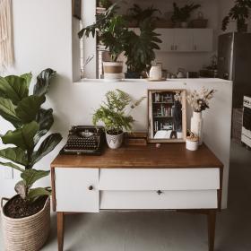 7 astuces naturelles pour chasser les moucherons qui envahissent vos plantes vertes