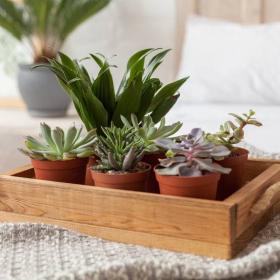 7 plantes à mettre dans sa chambre pour mieux dormir