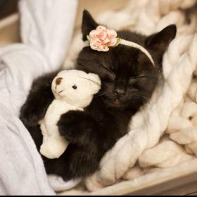 Les photos de ce chaton endormi sont si mignonnes qu'elles vont vous faire craquer !