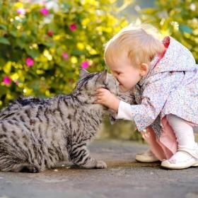 Les scientifiques ont enfin expliqué pourquoi les chats nous permettent de vivre plus longtemps