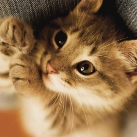3 choses à faire pour que votre chat se sente bien chez vous