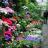 Marchés aux fleurs : découvrez les plus beaux lieux de Fra...