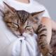 10 signes que votre chat vous aime à la folie