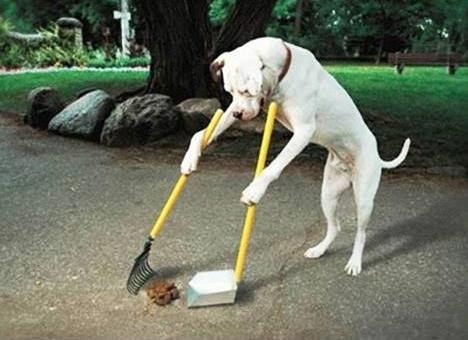 http://sobusygirls.fr/uploads/2013/01/chien-qui-ramasse-une-crotte.jpg