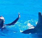 colonies-de-vacances-mon-ami-dauphin-