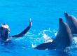 colonies-de-vacances-mon-ami-dauphin