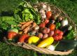 panier-de-legumes-