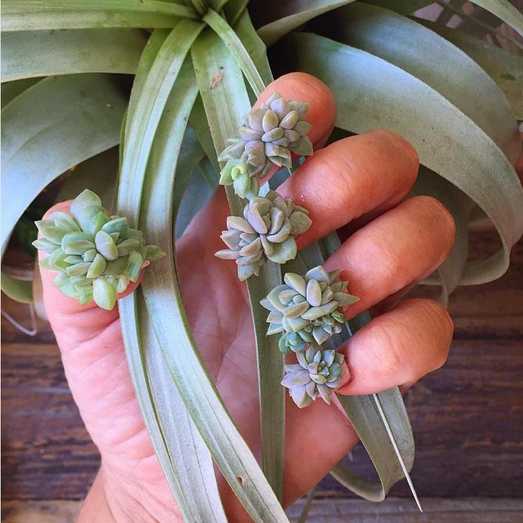 nail-art-succulentes-2