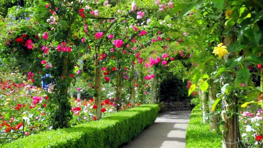 fleurs-planter-grand-jardin
