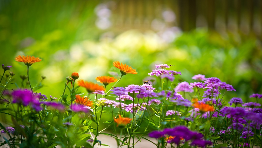 fleurs-planter-jardin
