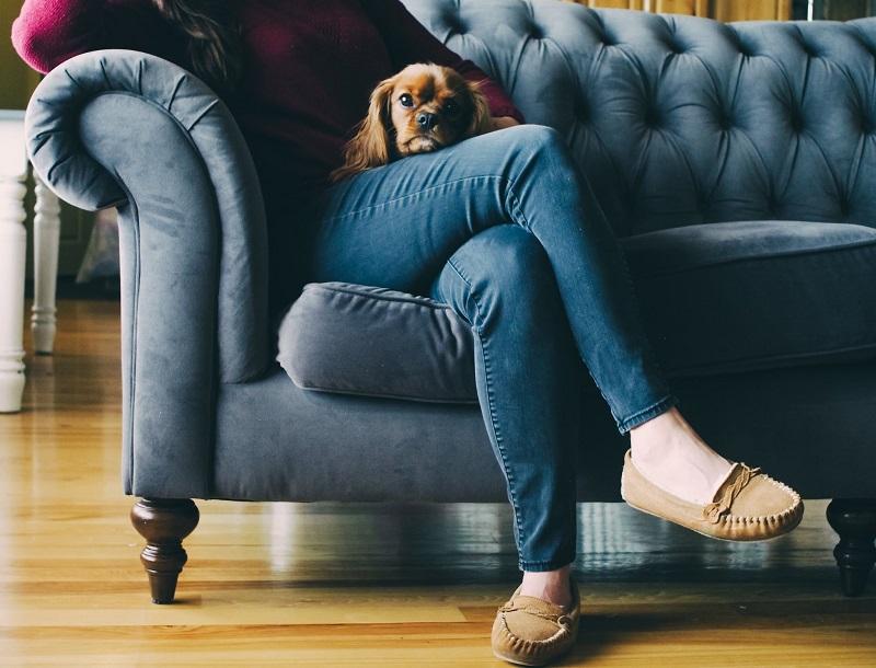 chien-sur-les-genoux-canape