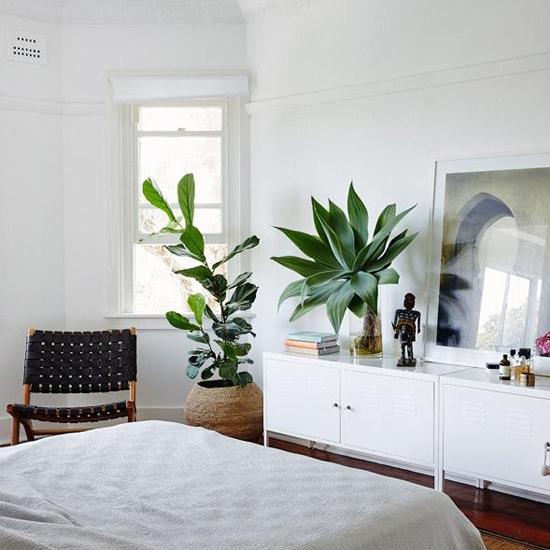 plantes-dans-la-chambre